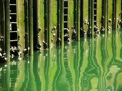 (florenarocena) Tags: verde green reflections vert grn reflexions riflessi reflexo spiegelung reflets reflejos estremit mtrtrophyshot mygearandme mygearandmepremium mygearandmebronze mygearandmesilver