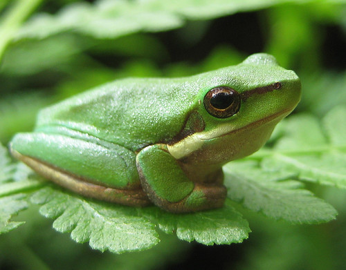 Frog that turned milk into butter and lived
