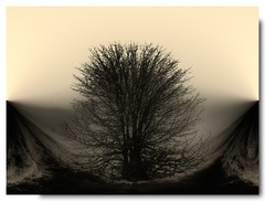 The Tree Bowl (garthm34 [mostly away]) Tags: photofaceoffwinner pfogold
