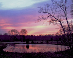 Evening Showcase (joehall45) Tags: pink blue trees sunset reflections pond purple shrubs citrit goldsealofquality