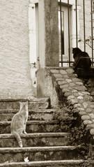 Les solitaires (__LS__) Tags: city bw panorama france animal cat freedom concentration cool chat solitude noiretblanc pierre libert zen dedos bled grille animaux pau ls escalier ville solitaire chatnoir sudouest aquitaine