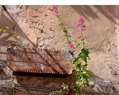 Vecchia insegna (Ola55) Tags: italy fabulous distillery oldwalls sanfelicecirceo fdream hccity worldtrekker vecchimuri yourcountry ola55 murifioriti floweringwalls