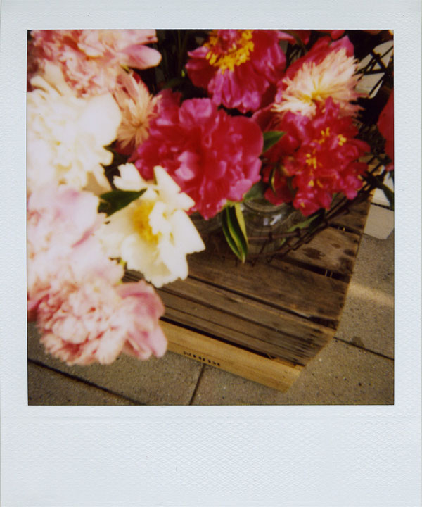 may30: dahlias