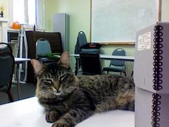 Archives cat