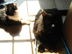 Josie and Huggy Bear in a ray of sunlight