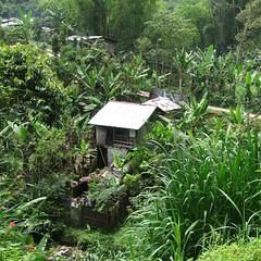La Mina (sonyacita) Tags: green home square colombia lush lamina pereira