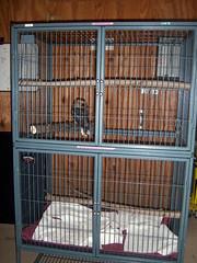 """RGZ - Baby Kookaburra """"Stitch"""" (fkalltheway) Tags: babybird kookaburra rosamondgiffordzoo babykookaburra fkalltheway kookaburrachick"""