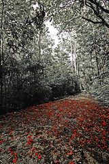 carpeted (mmlim) Tags: red bw dedication philippines chito lasang initao