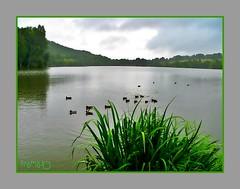 Pouring down..... (framajo) Tags: nature rain weather clouds landscape duck treasure hidden hiddentreasure heartawardsgroup diamondstars proudshopper photographersgonewild