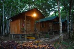 Jungle Huts (Nature Lodge)