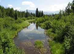 Swan Valley - Montana