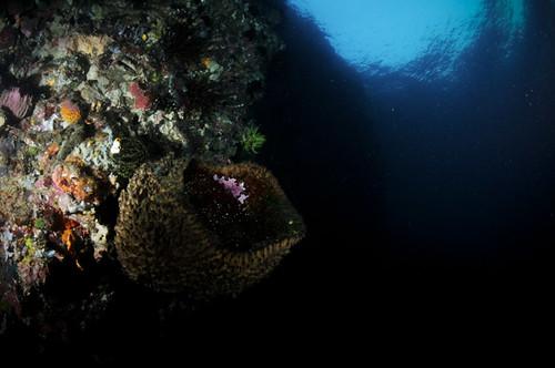 Mystery Underwater