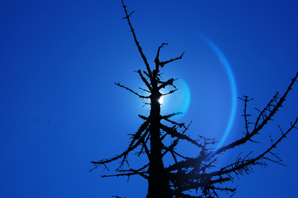 sun_tree_0160