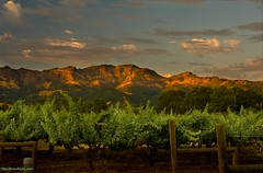 Calistoga Sunset IMG_1938