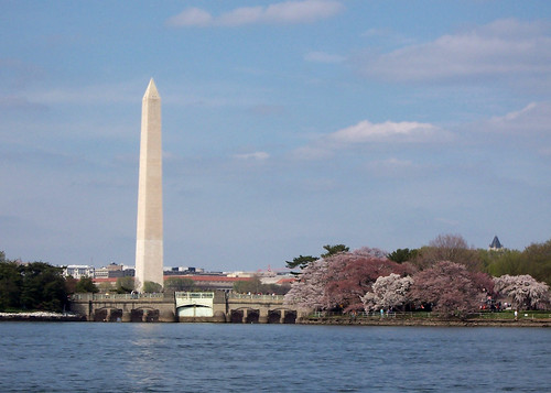 tidal basin during cherry blossoms
