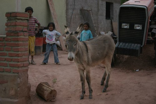 Kids + baby donkey. Pituil - Argentina.