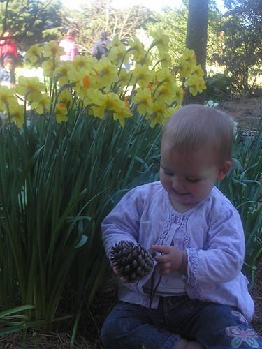 daffodilfarm1