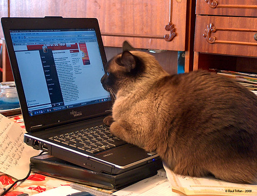 Cat reading online news