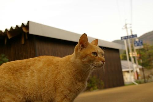 Stray Cat #11