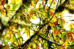 Mosses and leaves