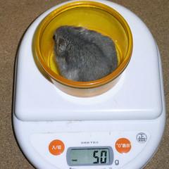 コー太は体重が減少