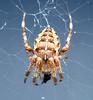 Drydock spider 2