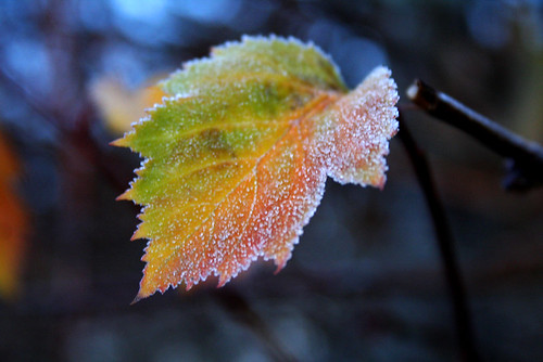 First frost 3
