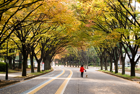 komozawa park_0313