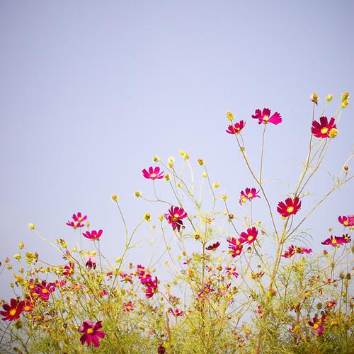 flower。