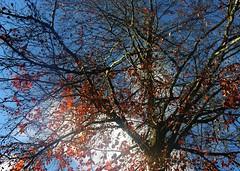 (:Linda:) Tags: sky cloud tree germany ast branch village wolke thuringia twig baretree cloudysky wolkig zweig brden bewlkterhimmel nackterbaum