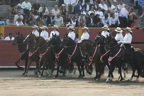 Caballos peruanos de paso en Acho