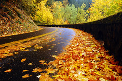 Historic Highway, Autumn Study #1 (LiefPhotos) Tags: autumn oregon fallcolors autumncolors fav30 topf100 columbiarivergorge historiccolumbiariverhighway columbiariverhighway historichighway
