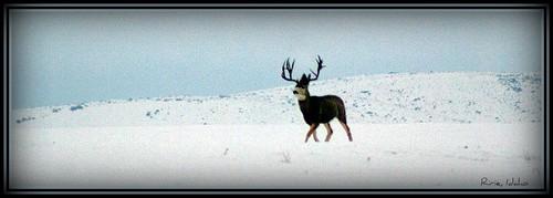 Ririe, Idaho
