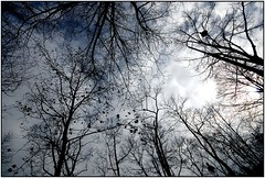 the light between their fingers (kubse) Tags: vienna winter sky snow tree clouds dark fabulous magicmoments sigma1020 mywinners perfectangle platinumphoto thesecretlifeoftrees ringstrase