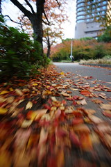 Go in the fall (ddsnet) Tags: japan gallery sony   nippon osaka nihon 900 backpackers      mywinners osakafu  ulimateshot sakashi  900 damniwishidtakenthat   photoshavebeeningallery