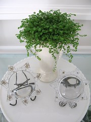 Baby Tears and Paperweights On Milk Glass (sunshinesyrie) Tags: white plant star victorian magnifyingglass whitebackground pottedplant decorating vase pottery delicate paperweight sunroom sunporch gardenroom floridaroom whitepottery babytears glassstar whitevase whiteandgreen cottagehouse whitehome whitelivingroom brightandairy cottageinteriors milkglasstray victorianpaperweight victorianstar sunroomideas