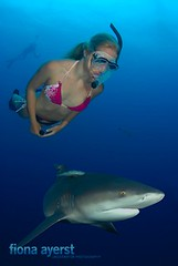 dive buddies (Fiona Ayerst) Tags: ocean blue sea woman holiday female shark underwater snorkel dive bull snorkeling jaws diver fin creature blueribbonwinner