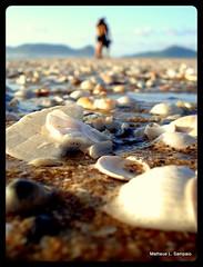 Romance (Matheus de Lima Sampaio) Tags: floripa beach shell anawesomeshot artofimages