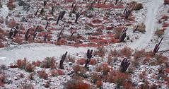 camino y cardon (MARITA ROSELL) Tags: flores argentina salinas cielo nubes tormenta seco norte humahuaca purmamarca jujuy cardon celeste quebrada vegetacion lipan silvestres caminosinuoso postadehornillos