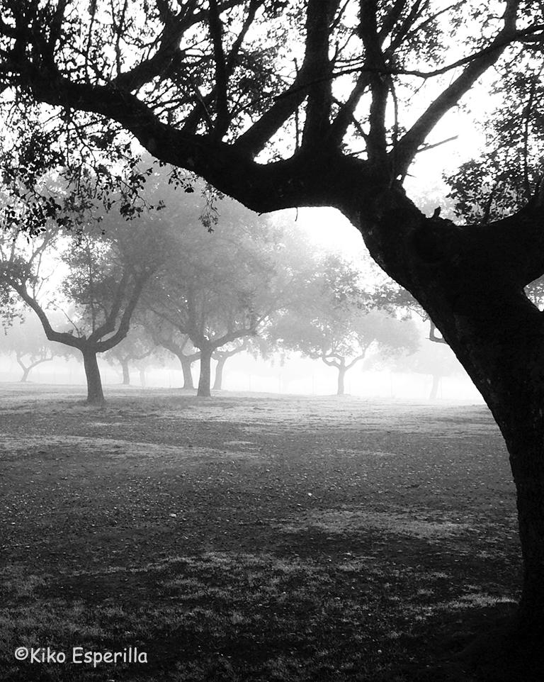 Niebla en la dehesa