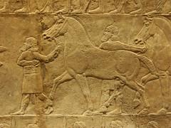 BM_ANE567 (sipazigaltumu) Tags: london museum ancient near antique east bm british mesopotamia basrelief reliefs assyrian antiquit ashurnasirpal antiquite ashurbanipal assurbanipal orthostat assurnasirpal orthostate tiglathpilesar tiglatpilesar tiglatpileser