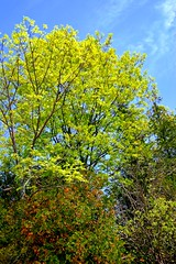 Spring green across my path! (biosynthesis24) Tags: summer usa lake ecology beautiful beauty spring good michigan gorgeous dunes lakemichigan forgetmenot secondary transition spiritual simple biology better zone memorialday glenarbor torquoise succession glenlake sleepingbeardunesnationallakeshore primarysuccession northernlowerpeninsula puremichigan