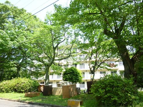 【6月6日(月)9時30分ころ 芝生の上のスペースに置かれたたんすが、こじんまりとみえるほど木が茂っています】