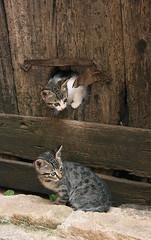 Los dos gatitos (marathoniano) Tags: espaa naturaleza nature anima