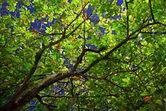 foliage (leafbug) Tags: streetphotography putrajaya utatafeature muwphotoouting