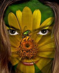 Stalk gUREL (ViaMoi) Tags: ontario canada colour art digital photoshop photography design ottawa manipulation images chrome manipulate viamoi