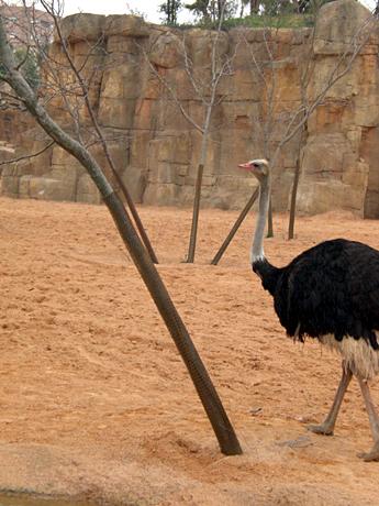 bioparc-ostrich-valencia