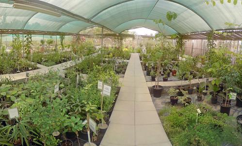 The Garden Nursery Mahmoods Den Mahmoods Den