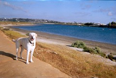 Duke at Fiesta Island