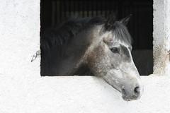 Petit Gris a la fenetre (frederic_45240) Tags: horse canon cheval photo tokina 80400 xti 400d aplusphoto qualitypixels frdriccastan